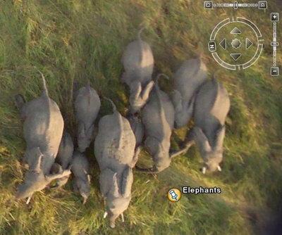 Elefantes en Google Earth